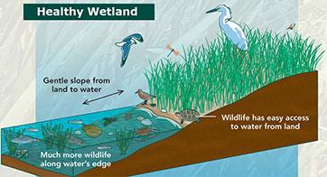 Delaware Estuary's Tidal Wetlands