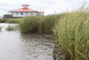 Living Shoreline, DuPont Nature Center