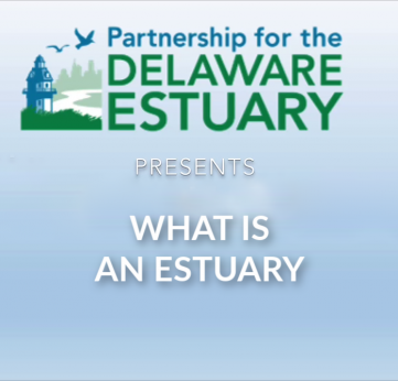 Photo of What is an Estuary?