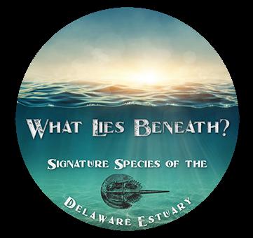 Photo of What Lies Beneath? A Webinar Series