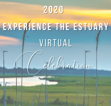 Photo of Experience the Estuary 2020